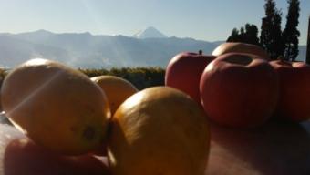 山梨フルーツ温泉ぷくぷく「かりん」と「りんご」風呂開催!