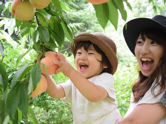 山梨フルーツ温泉ぷくぷく 桃狩り写真