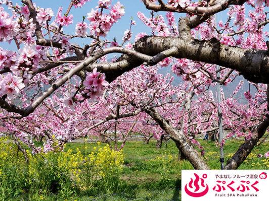 ぷくぷく 桃の花