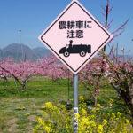 ぷくぷく 山梨市・笛吹市 桃の花_03