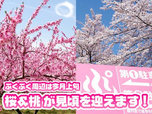 ぷくぷく桜と桃