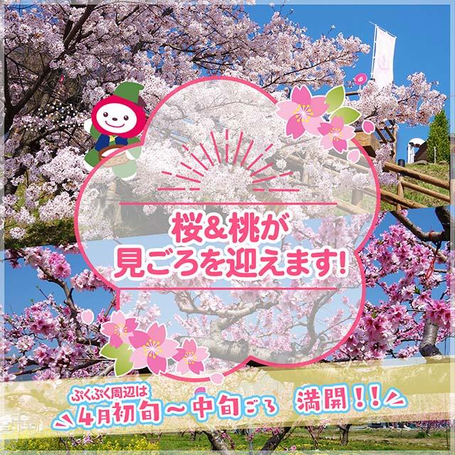 「桜と桃の花」情報